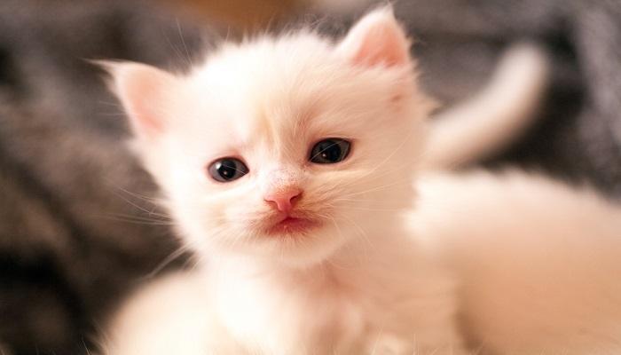 Cara Merawat Bayi Kucing Tanpa Induk
