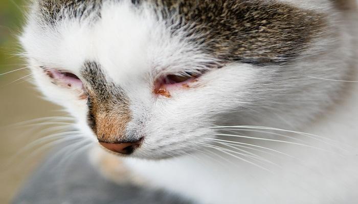 Ciri-ciri Kucing Sakit