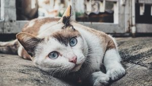 Kerugian Memelihara Kucing