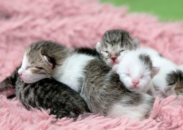 Makanan Anak Kucing Yang Baru Lahir Kucingmania