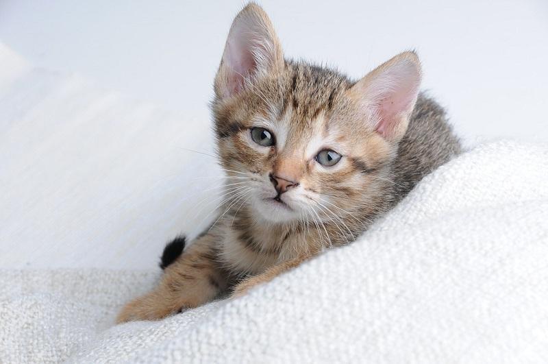 Tips dan Cara Merawat Kucing Sakit