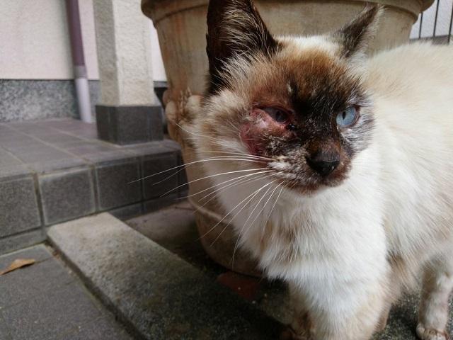 Akibat kucing tidak divaksin