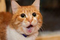 Kucing Sariawan