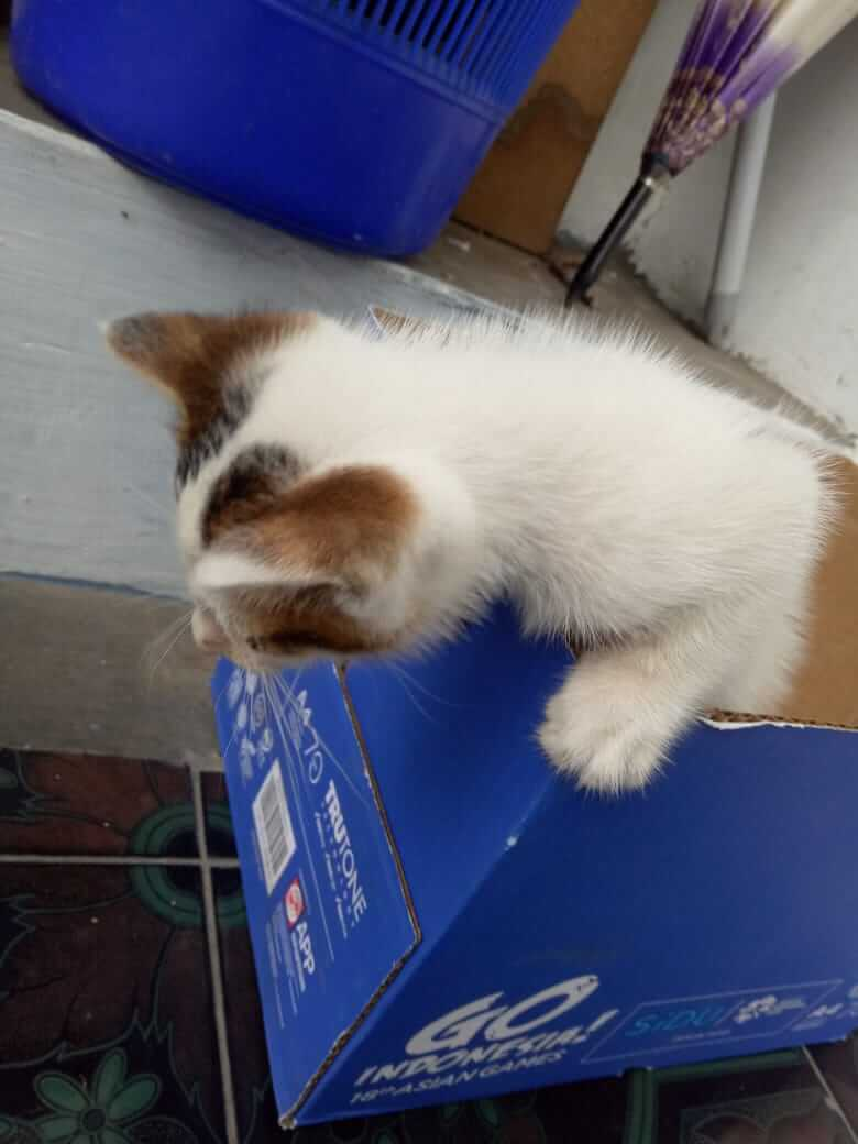 Kucing terbuang