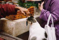 Makanan Kucing Selain Ikan