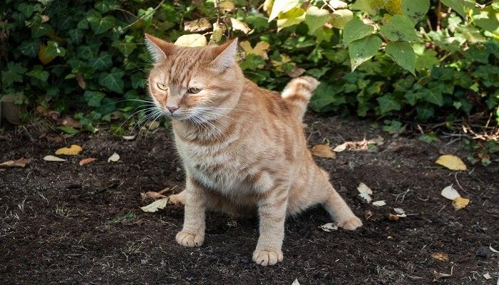 Mengobati Kucing Mencret
