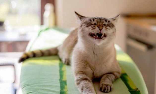 Mengobati kucing bersin-bersin