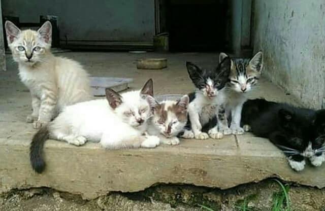 Kucing Dibuang Dalam Karung