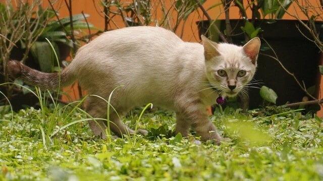 Kucing Dibuang