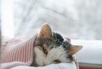Vitamin Untuk Kucing Flu