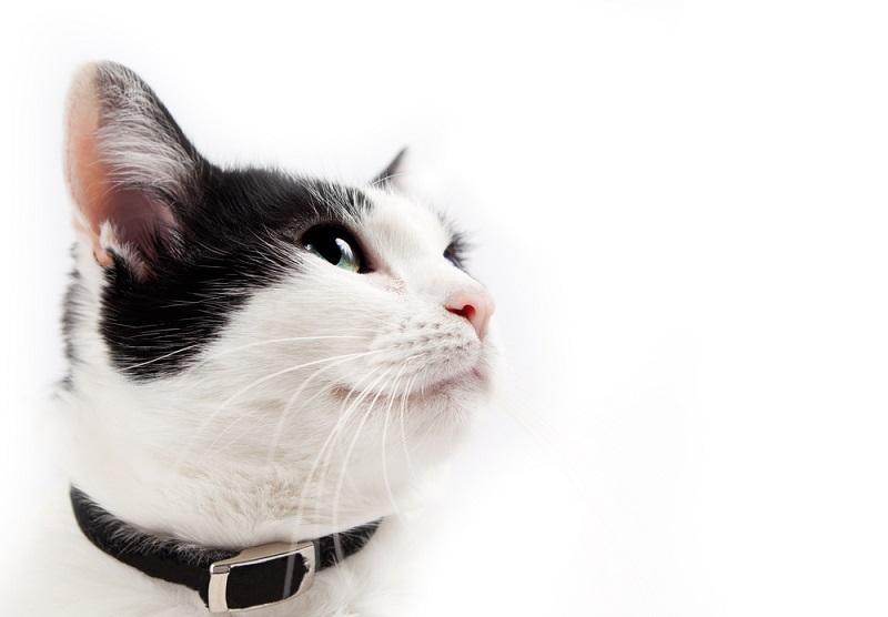 Awas Bahaya Kalung Kucing