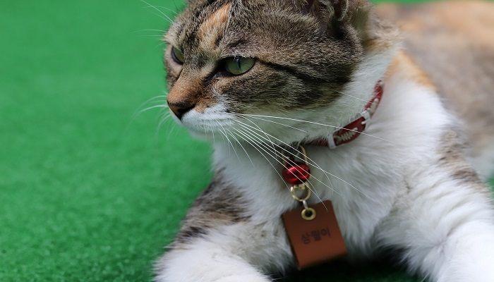 Bahaya Kalung Kucing