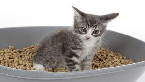 Mengobati anak kucing mencret