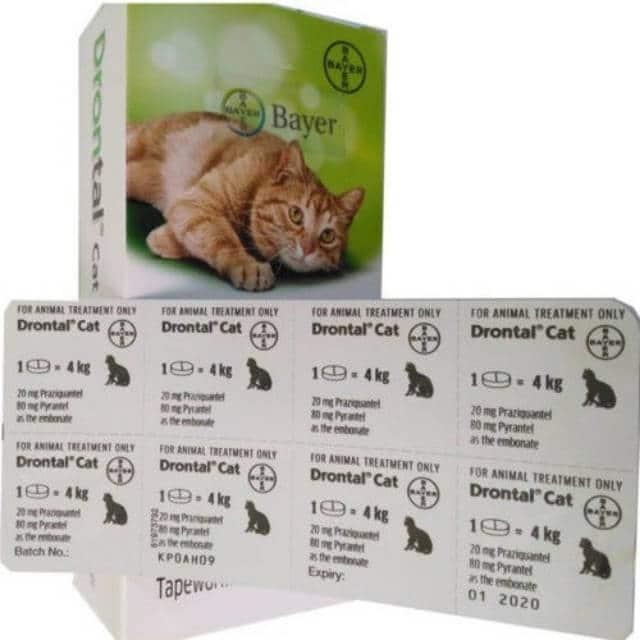 Drontal obat cacingan untuk kucing