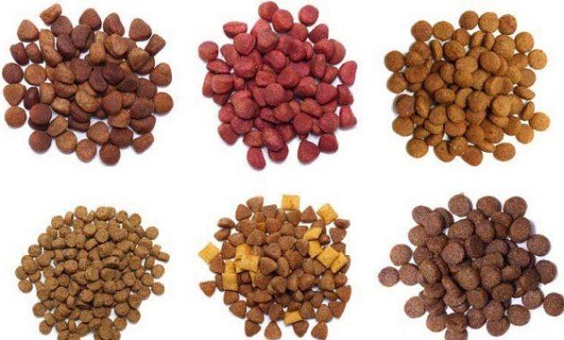 Jenis-Jenis Makanan Kucing - Dry Food