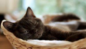 Makanan Kucing Yang Sedang Sakit