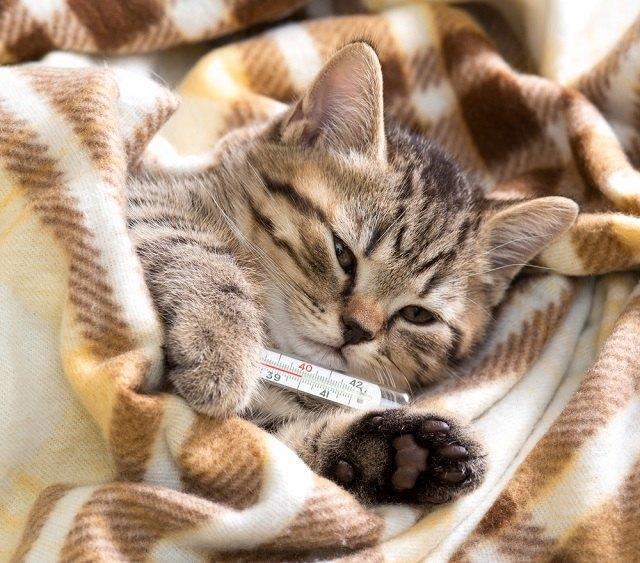 Rekomendasi Makanan Kucing yang Sedang Sakit