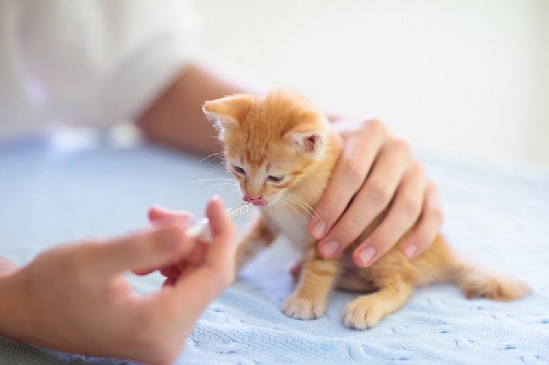 Tips dan Panduan Merawat Anak Kucing