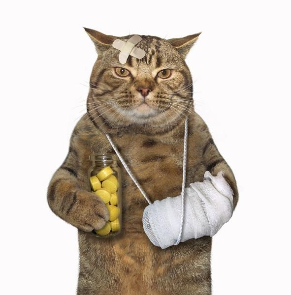 Cara Mengobati Luka Pada Kucing Agar Cepat Sembuh
