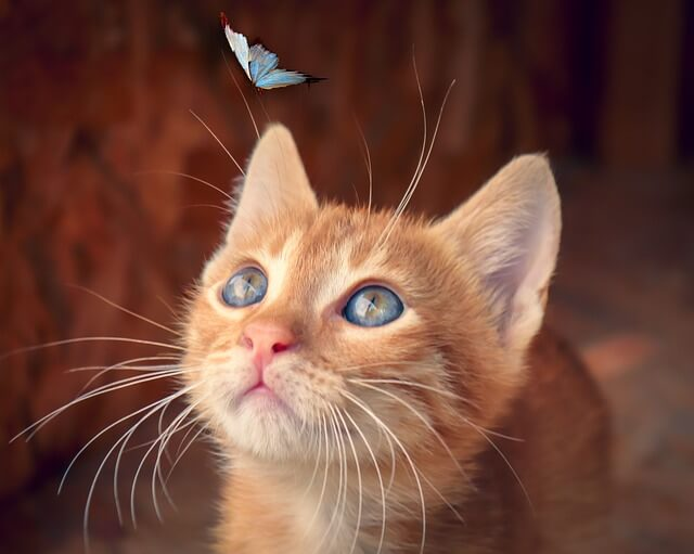 Fakta Tentang Kucing
