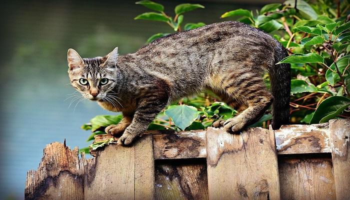 Hal yang Tidak Disukai Kucing