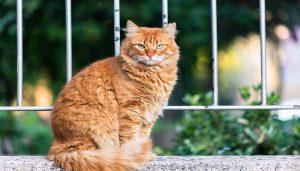 yang Disukai Kucing