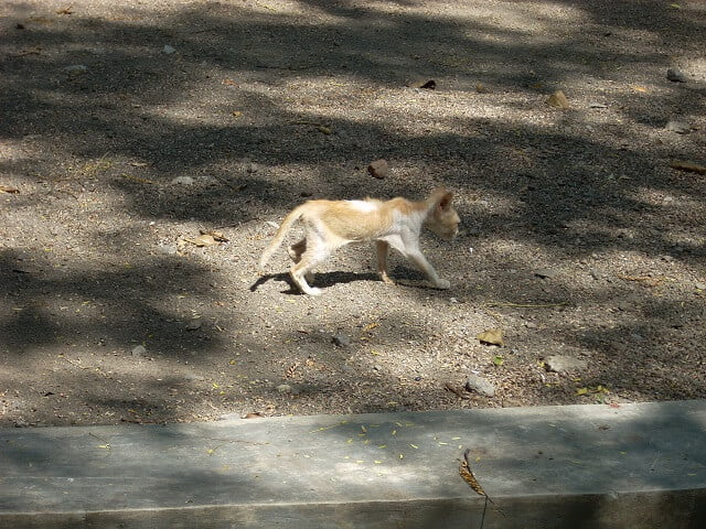 Penyebab Kucing Kurus