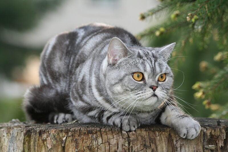 Jenis-jenis Kucing