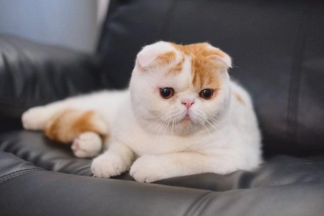 Kucing Foldex