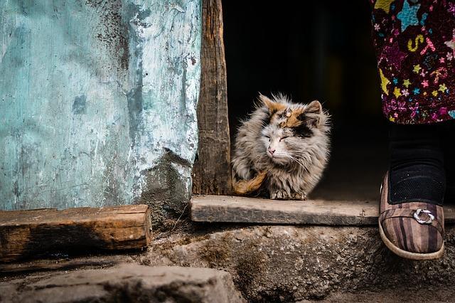 Gejala Virus leukemia kucing