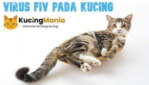 Virus FIV Pada Kucing