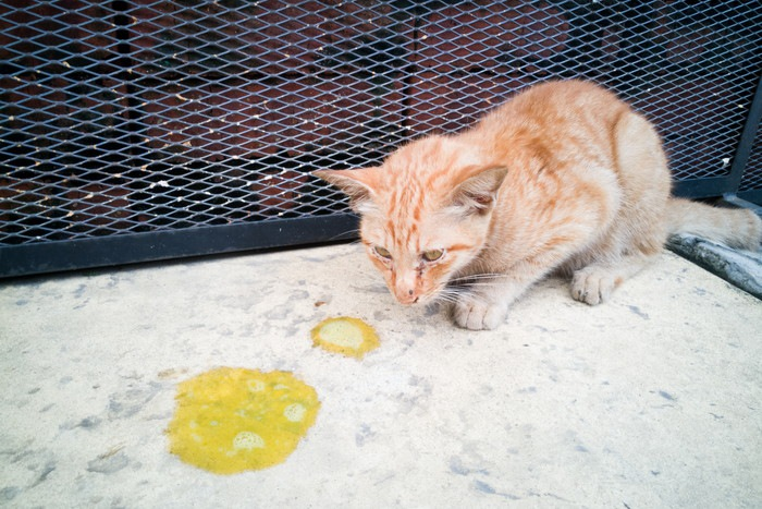 Virus Panleukopenia Pada Kucing