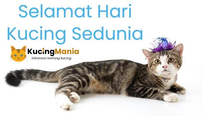 Hari Kucing Sedunia