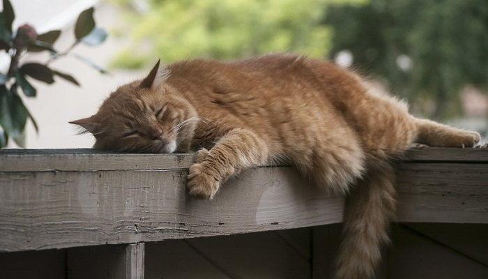 Kucing Sering Tidur