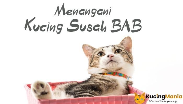 Kucing Susah BAB