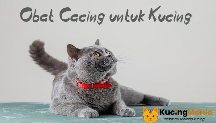 Obat Cacing untuk Kucing