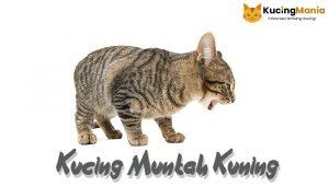 Kucing Muntah Kuning