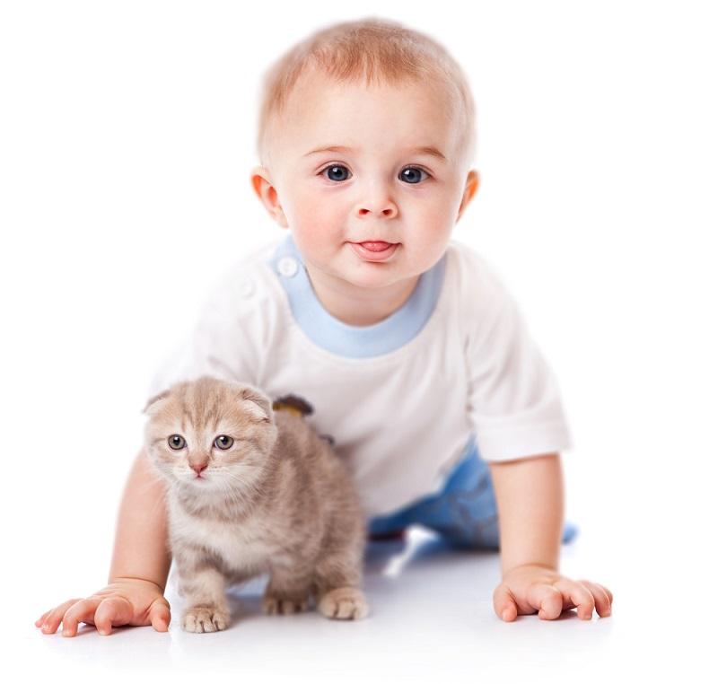 Perbandingan Umur Kucing dan Manusia